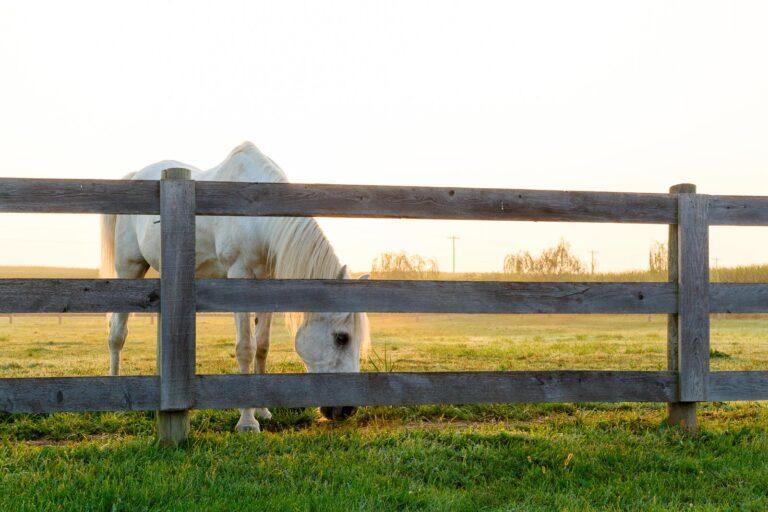 horse through fence