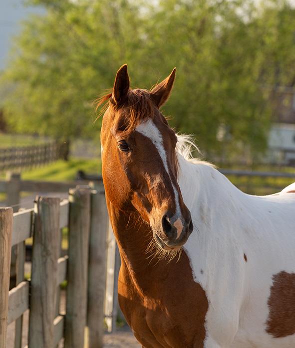 sun on horse