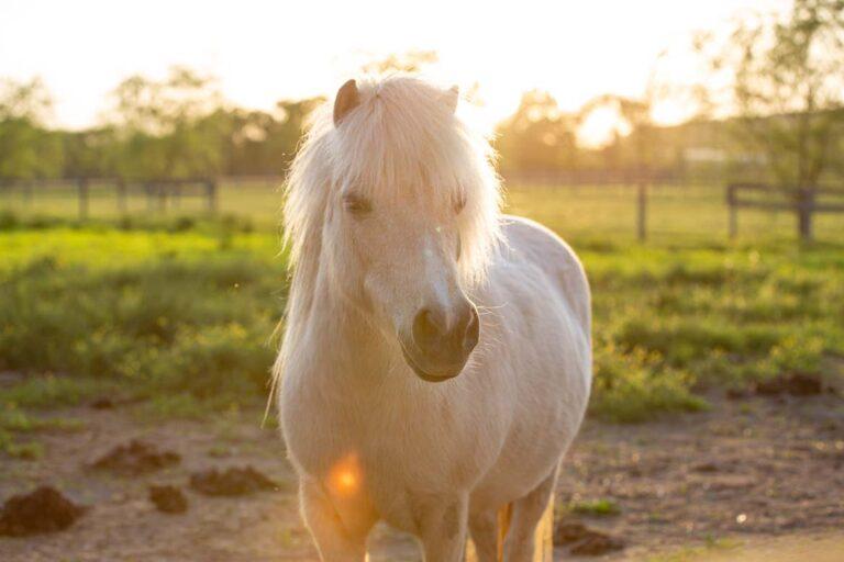 White pony with sunrise